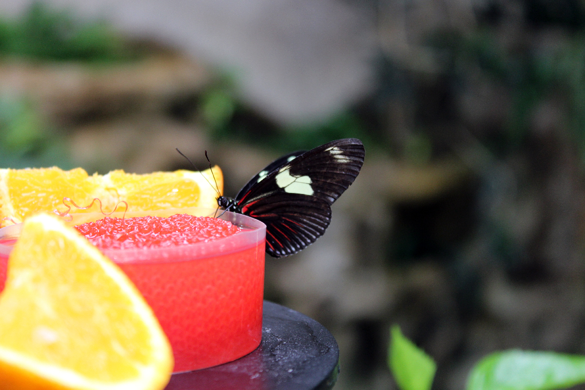 Hungry butterfly in Vienna zoo