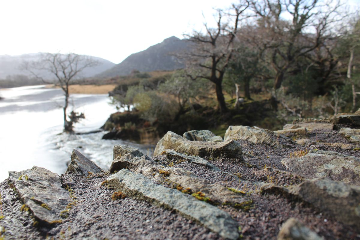 Landscape Killarney National Park