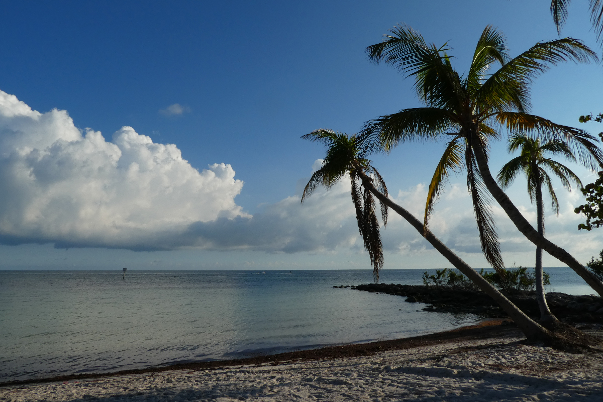 Palm trees at Key West beach