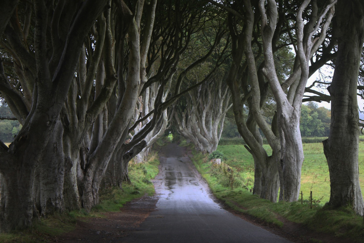 Dark hedges in Ireland - Game of Thrones