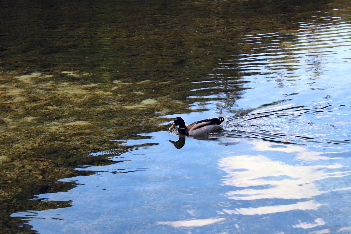 Speed duck