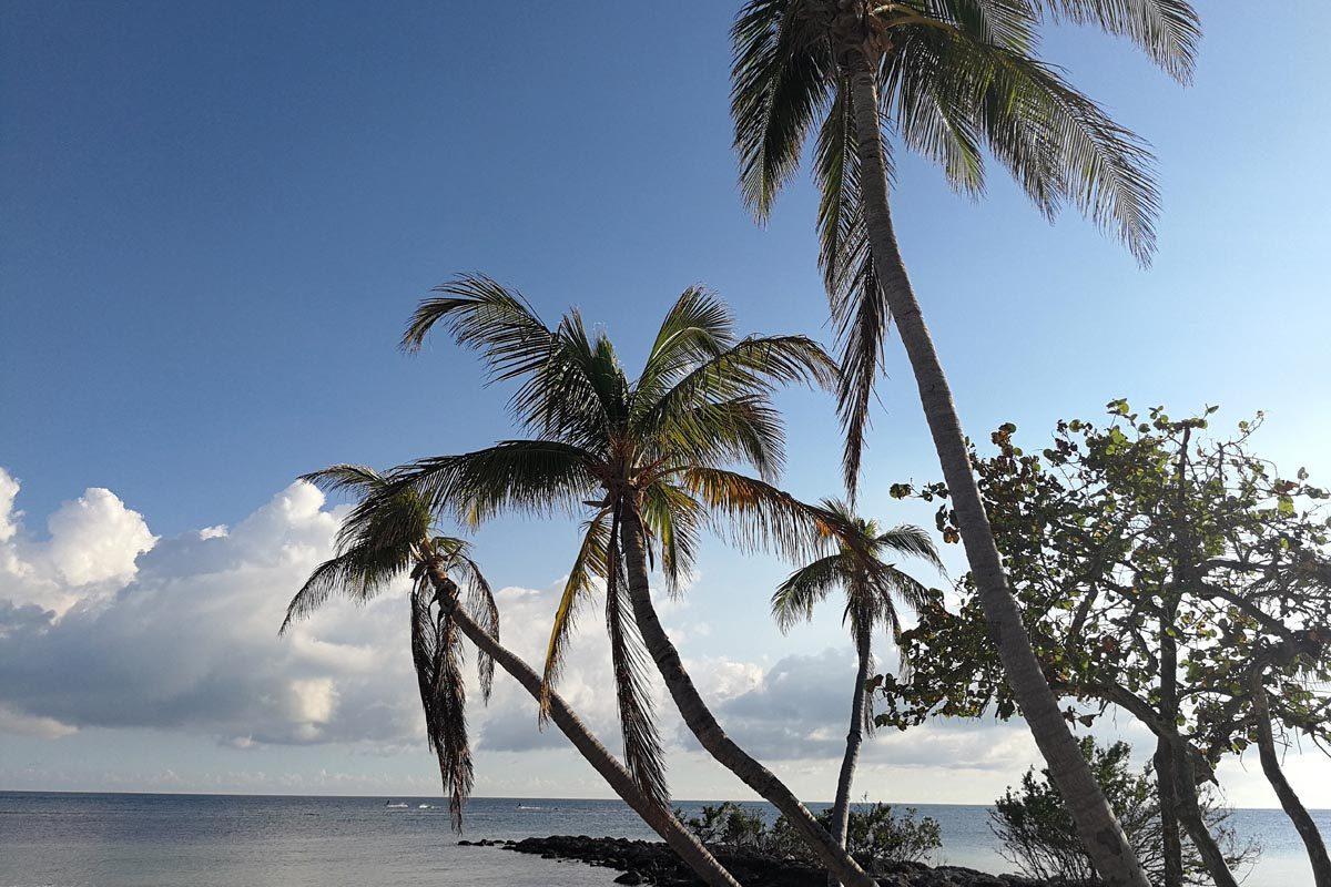 Palm trees Key West
