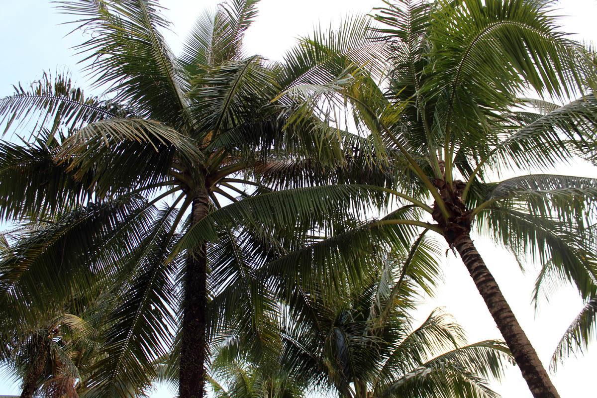 Palms in Krabi