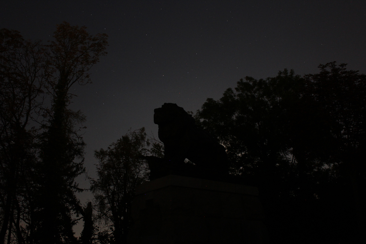 Lion at night in Graz