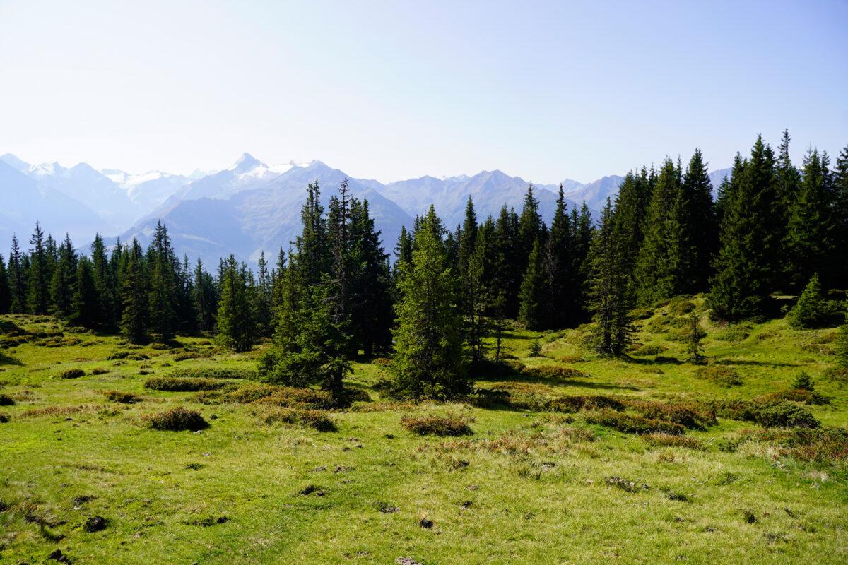 Schmittenhoehe forest